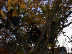 brussels tree climbinng